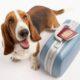 Перевозка животных в Аэрофлот